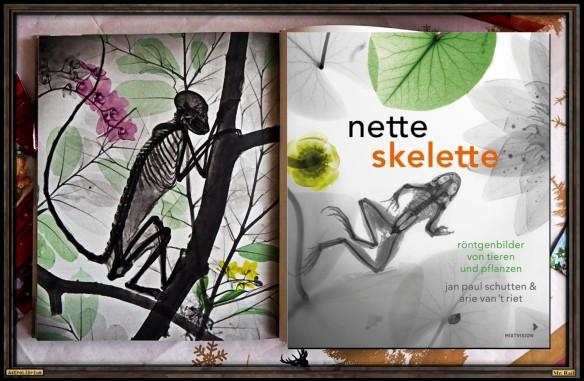 Nette Skelette - Röntgenbilder von Tieren und Pflanzen - Astrolibrium